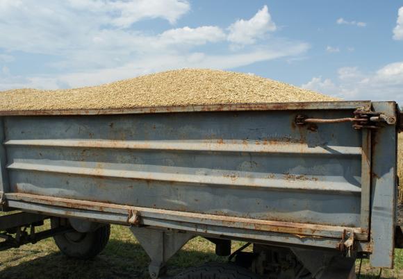 На Софийската борса за поредна седмица имаше сделки за големи количества хлебна пшеница