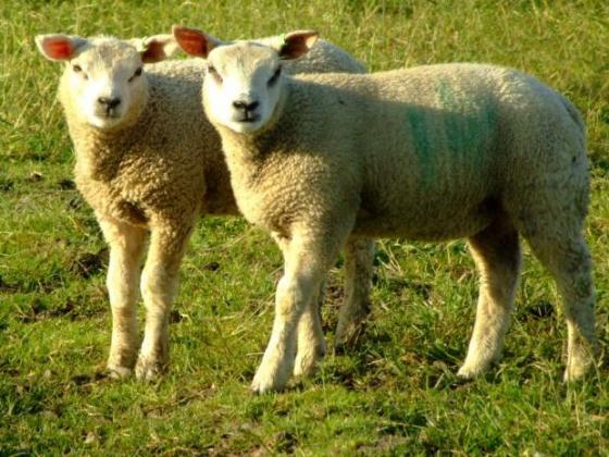 Отварят приема за плащане по мярката за хуманно отношение към животните в края на месеца