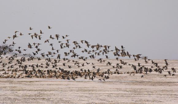 Порожанов: Над 4,4 милиона лева са изплатени на птицевъдите заради огнищата на грип