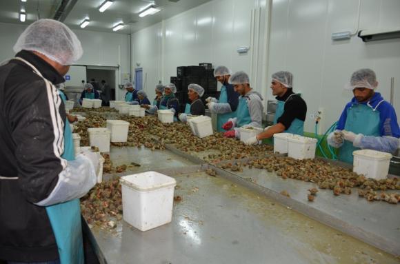 Промени в рибарската програма дава възможност за компенсиране на производителите на аквакултури