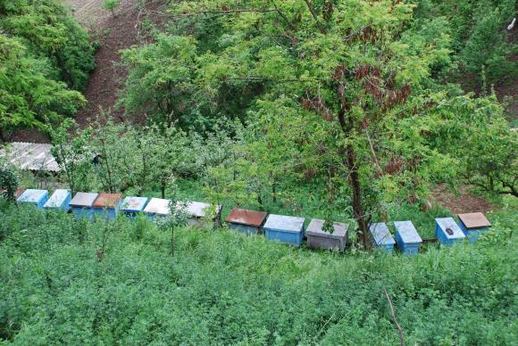 Биофермерите в подкрепа на пчеларите срещу кухите фирми