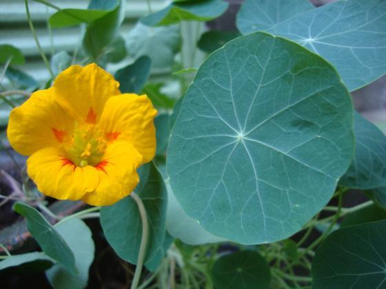 Растенията - естествени инсектициди, и тяхната употреба