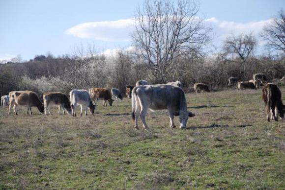 БАБХ засилва надзора над всички животновъдни обекти-пасища