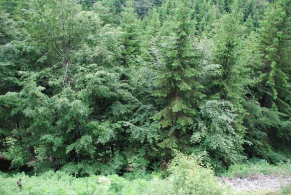 Нагла провокация срещу проверките в горите край Разлог