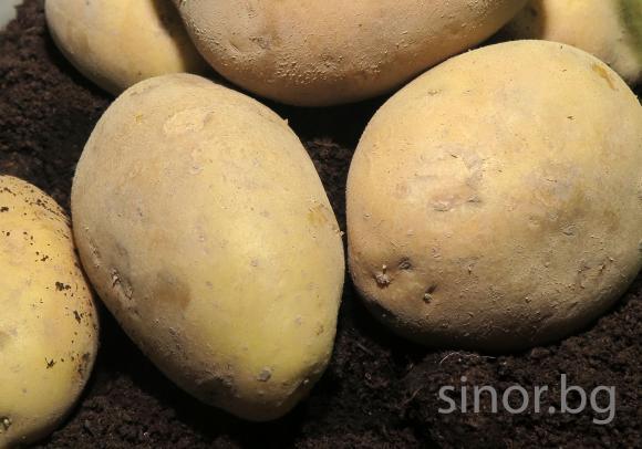 Идва време да се рътят картофите