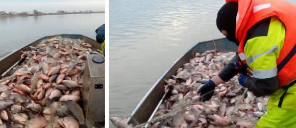 Над един тон каракуда иззеха от бракониери