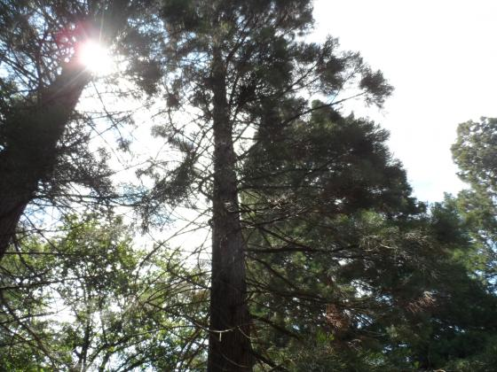 Еколози сигнализират за сеч в Борисовата градина