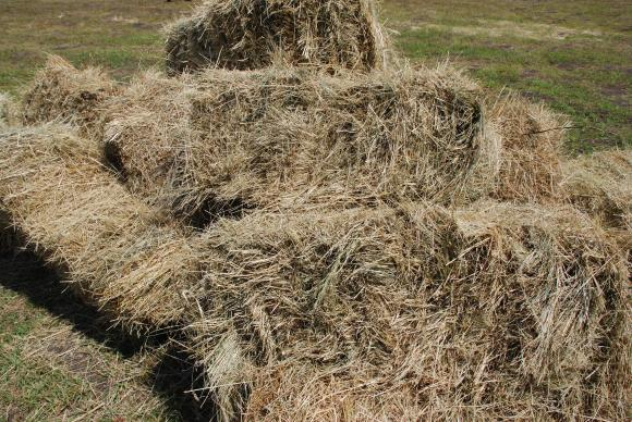 Предвиждат санкции за умишленото превръщане на суровини в отпадъци за биогорива
