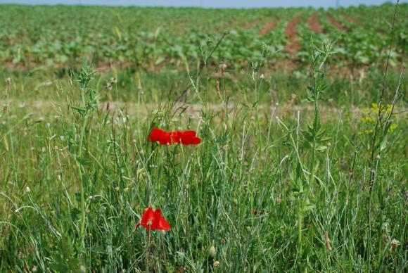 В 32 страници и Националната биоасоциация критикува закона за земята