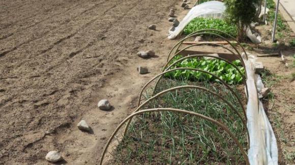 Почвата се полива преди засяване, а не след това