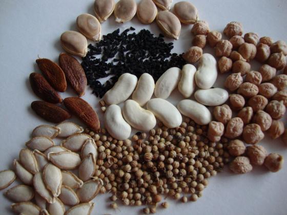 Закалените семена не само поникват по-бързо, но са и студоустойчиви