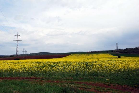 UFOP призовава Европейската комисия да осигури икономически устойчива перспектива за отглеждане на рапично семе в ЕС