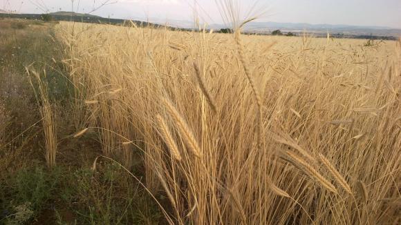 Износът на зърно от началото на година е напълно замрял