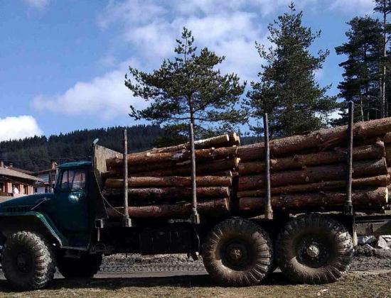 Служители от ИАГ задържаха автомобил и 8 кубика дървесина
