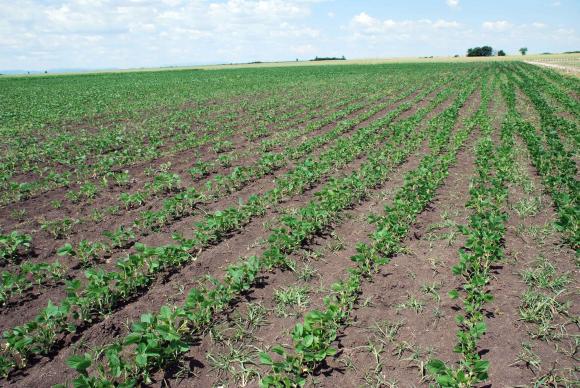 Арендата за държавните земеделски земи в Украйна надхвърли 2 пъти тази за частните