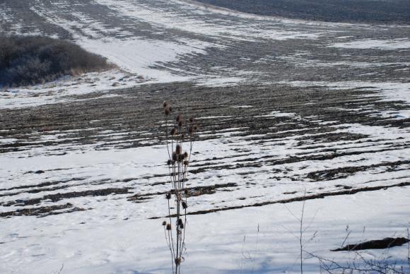 Мариела Йорданова: Няма ли дебел сняг, няма добра реколта