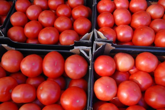 През 2019 г. консервните фабрики ще изкупят 52 хиляди тона домати