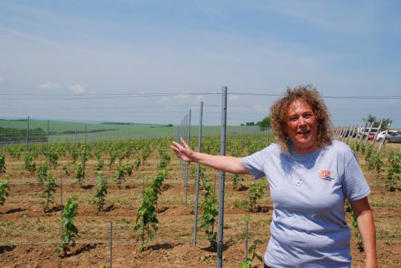 Готви се пореден линч за българското биопроизводство