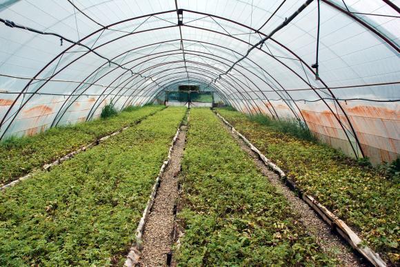 Сортоизпитването при овошките ще бъде само за различимост, без опити за доказване на качества