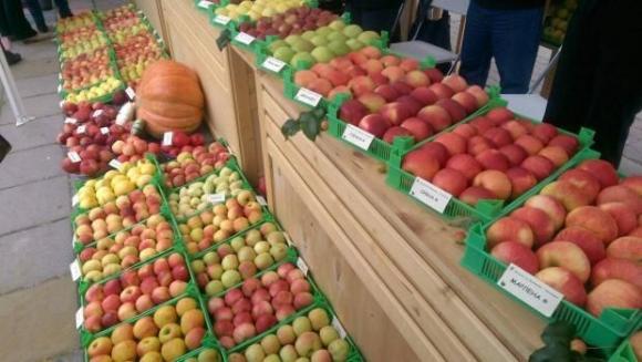 Организациите на производители на плодове и зеленчуци ще могат да правят трайни инвестиции само на собствена или арендована за поне 10 години земя