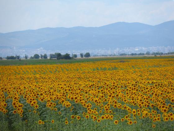 Асоциацията на зърнопроизводителите като домакин на европейски аграрен форум