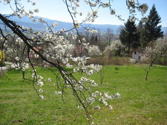 Задължителни пролетни обработки в градината срещу болести и вредители