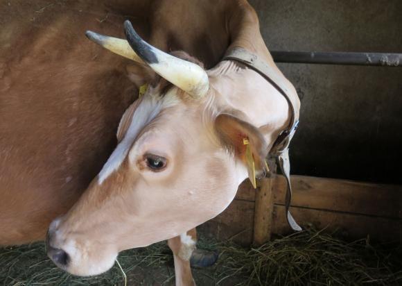Продукцията на мляко в ЕС продължава да се увеличава