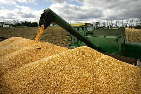 Украйна засилва износа на царевица, докато експортът на пшеница се забавя