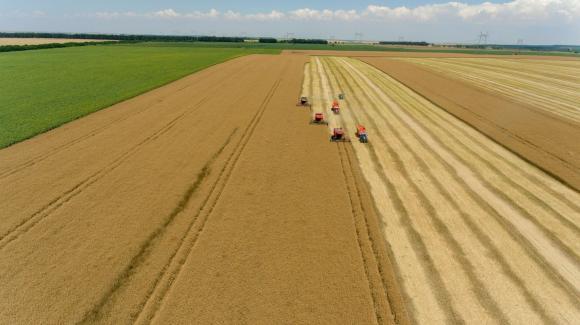 Меката зима вдигна оценките за добивите от есенниците в ЕС