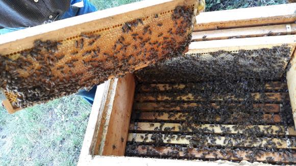 Украйна изнася все повече мед, но при спад в приходите
