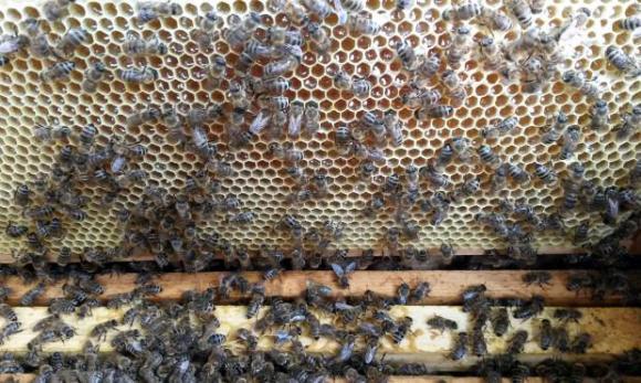 Пролетно третиране и подхранване на пчелите
