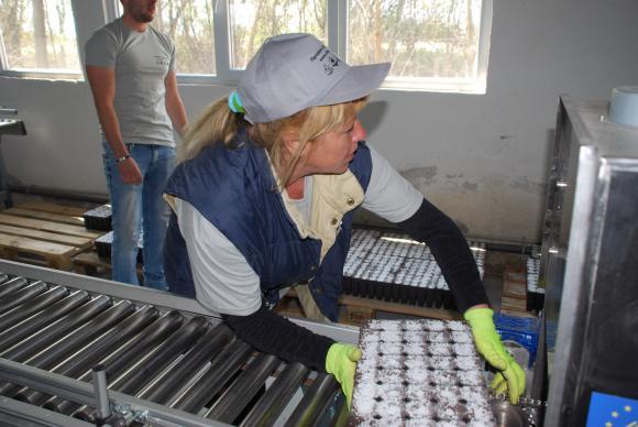 Разсадникът в Локорско ще подава по 1,4 милиона фиданки за държавните гори