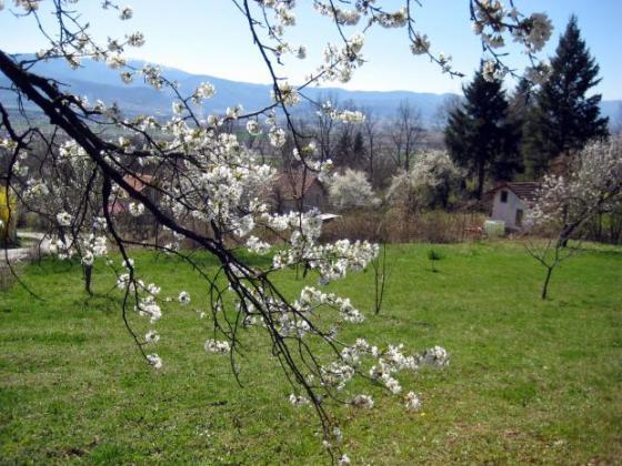 Градинари искат адекватни компенсации заради щетите от пролетния мраз