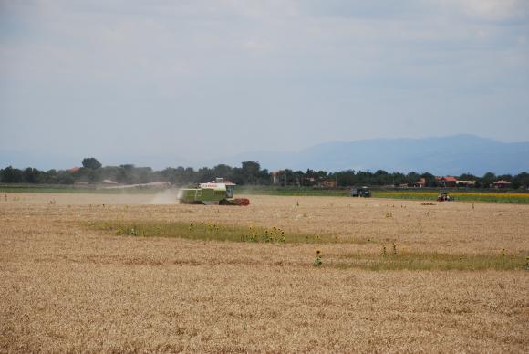 Цените на мелничарската пшеница в ЕС се покачват въпреки понижението им в САЩ