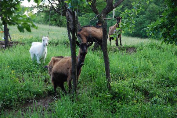 Родните фермери могат до 10 май да дават предложения в ЕП за наредбата за планинските продукти