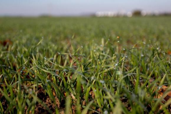 Новият ЕП ще кове законодателството за генетичната редакция на растенията
