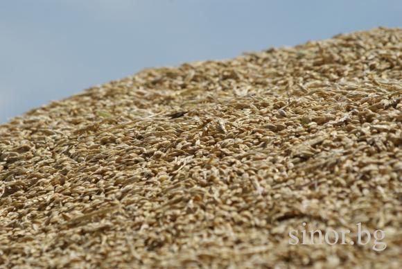 Засилен износ на зърнени храни  от Евросъюза