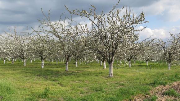 Овошките в Полша пострадаха сериозно от студовете