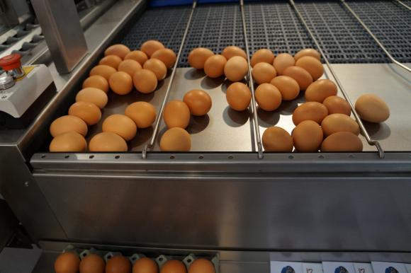 Как да сварим яйцата за безпроблемно белене