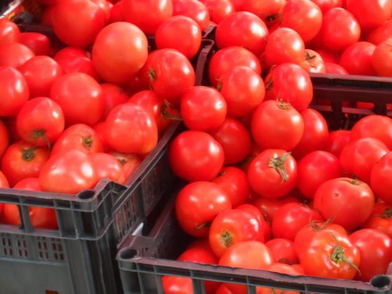 Износът на оранжерийни домати от Турция надхвърли 100 милиона долара