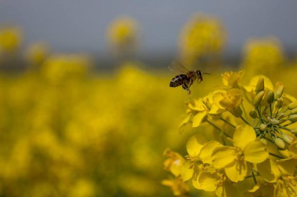 НАЗ апелира за създаване на Единен електронен регистър за уведомяване на пчеларите