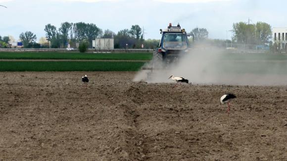 Първите признаци на суша в Германия и Австрия вещаят слаба реколта