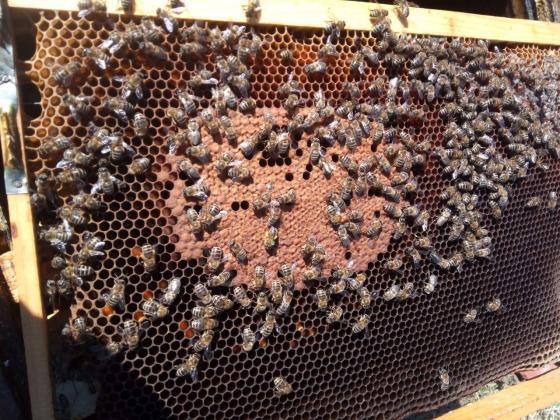 Пчелари внасят 9 искания в Консултативния съвет към агроминистерството
