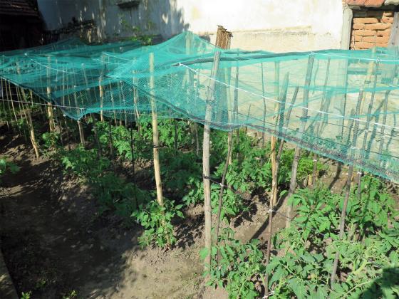 През май болестите по зеленчуците вече са в градината