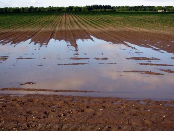 Обработка на почвата след наводнение