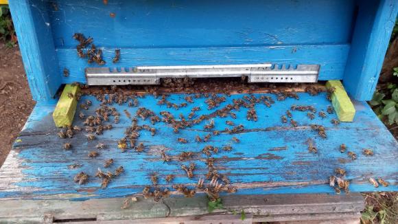 Над 100 пчелни семейства са унищожени край благоевградски язовир