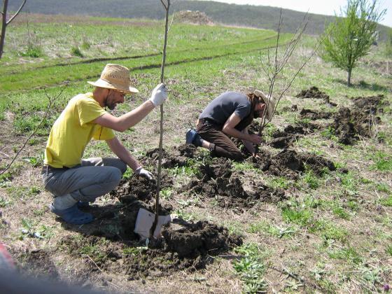 Ще залесяват 800 декара с нови гори в ловните стопанства в Североизточна България