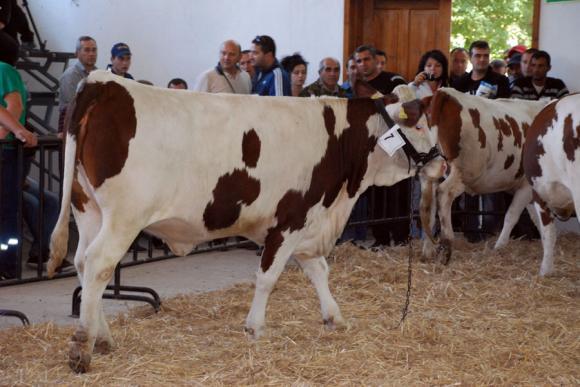 На 7 и 8 юни Сливен става център на животновъдството