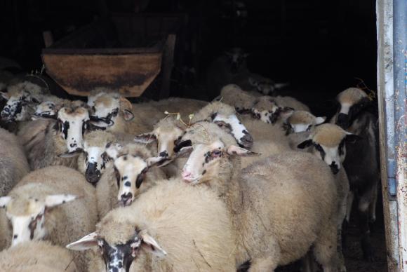 На 5 юни ще има дебат за орязаните субсидии за развойна дейност в животновъдството