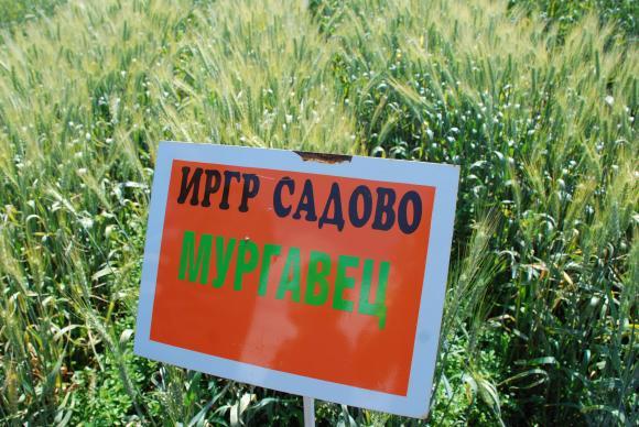 На 17 юни в Садово ще представят ефекта от груповото използване на водоразтворимите торове
